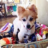 Adopt A Pet :: Garol - Vista, CA