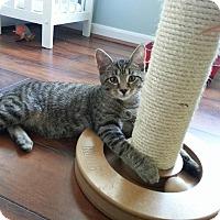 Adopt A Pet :: Bobby - Union, KY