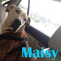 Adopt A Pet :: Maisy - Orangeburg, SC
