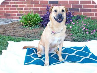 German Shepherd Dog/Shar Pei Mix Dog for adoption in Albemarle, North Carolina - Tilly