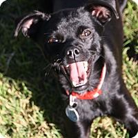 Adopt A Pet :: Delta - Edmonton, AB