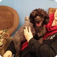 Adopt A Pet :: Tosha - Tulsa, OK