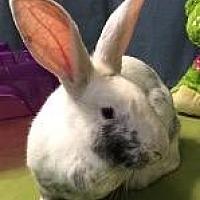 Adopt A Pet :: Moxie - Woburn, MA