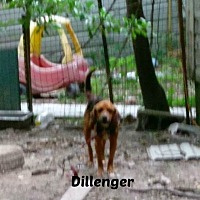 Black and Tan Coonhound Mix Dog for adoption in Malvern, Arkansas - DILLINGER
