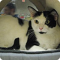 Adopt A Pet :: Pixie - Temple, PA