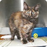 Adopt A Pet :: Barbie - Dover, OH