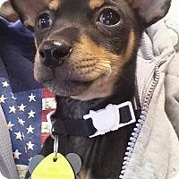 Adopt A Pet :: Spunky - Golden Valley, AZ