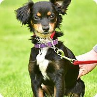 Adopt A Pet :: Bitsy - Santa Monica, CA