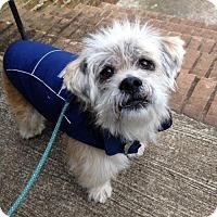 Terrier (Unknown Type, Medium) Mix Dog for adoption in Alpharetta, Georgia - Shamie