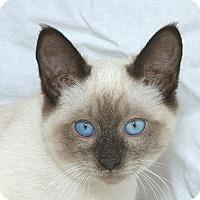 Adopt A Pet :: Ting-A-Ling M - Sacramento, CA