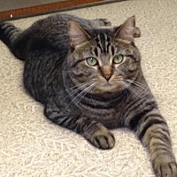 Adopt A Pet :: Luna bell - Anderson, IN