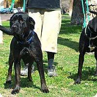 Adopt A Pet :: Ranger - Goodyear, AZ