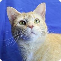 Adopt A Pet :: Penelope - Winston-Salem, NC