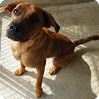 Adopt A Pet :: Chance - House Springs, MO
