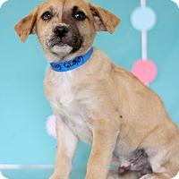 Adopt A Pet :: Gray - Waldorf, MD