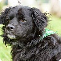 Adopt A Pet :: Rogers - San Diego, CA