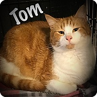 Adopt A Pet :: Tom - Cleveland, TN