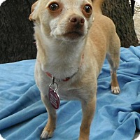 Adopt A Pet :: Pickle - Hagerstown, MD