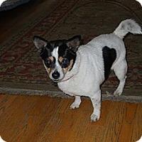 Adopt A Pet :: Brook - Charlotte, NC