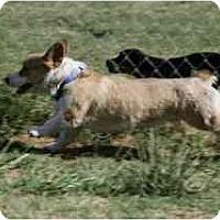Adopt A Pet :: Jordie - Inola, OK