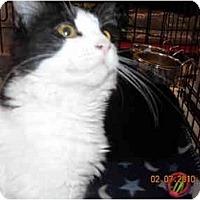 Adopt A Pet :: Princess Leah - Riverside, RI