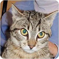 Adopt A Pet :: Dimitri - Colmar, PA