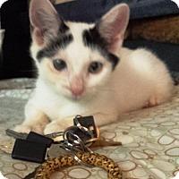 Adopt A Pet :: TUCKER - Ridgewood, NY