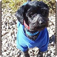 Adopt A Pet :: Indiana - Las Vegas, NV