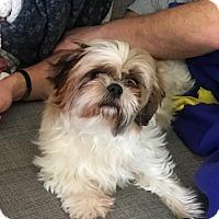 Adopt A Pet :: STAR-pending - Eden Prairie, MN