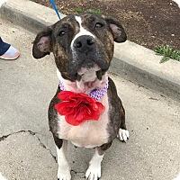 Adopt A Pet :: Galia - Avon, OH
