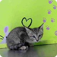 Adopt A Pet :: SATO - Houston, TX