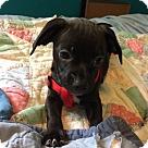 Adopt A Pet :: Chancla