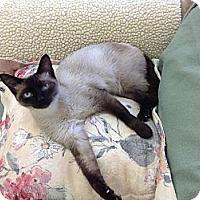 Adopt A Pet :: Melody #2 - Lake Charles, LA