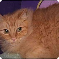 Adopt A Pet :: Sunny in Portland - Keizer, OR