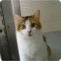 Adopt A Pet :: Josie - Winter Haven, FL