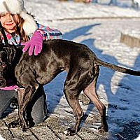 Adopt A Pet :: Mo - Reisterstown, MD