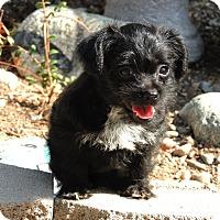 Adopt A Pet :: Madeline - La Habra Heights, CA