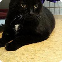 Adopt A Pet :: Rowan - Lenhartsville, PA