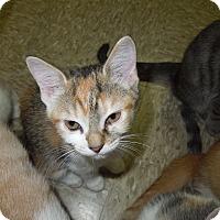 Adopt A Pet :: Kristen - Medina, OH