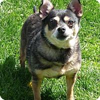 Adopt A Pet :: Mongo - Springfield, IL