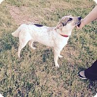 Adopt A Pet :: Kyle - West Hartford, CT
