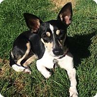 Adopt A Pet :: LollyBrook - Adoption Pending - Gig Harbor, WA