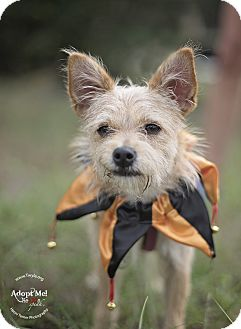 Terrier (Unknown Type, Small) Mix Dog for adoption in Kingwood, Texas - Phoebe