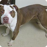 Adopt A Pet :: Nick - Gary, IN