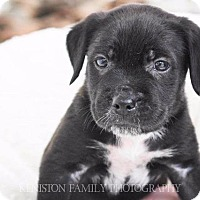 Terrier (Unknown Type, Small) Mix Puppy for adoption in Raleigh, North Carolina - Snap