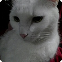 Adopt A Pet :: Pan - Trevose, PA
