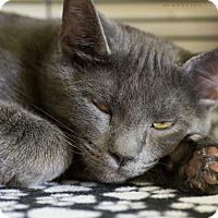 Adopt A Pet :: BRODY - Houston, TX
