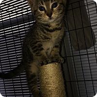 Adopt A Pet :: Princess Laya - Monroe, CT
