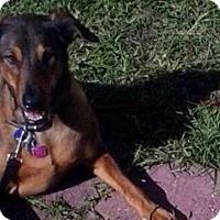 Adopt A Pet :: JESSIE - Hollywood, FL