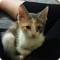 Adopt A Pet :: Ziva - McDonough, GA